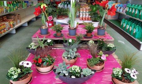 Horticulture Epiniac